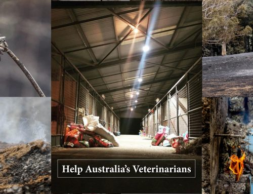 The Foundation for the Horse providing $10,000 in matching funds for Australia wildfire relief