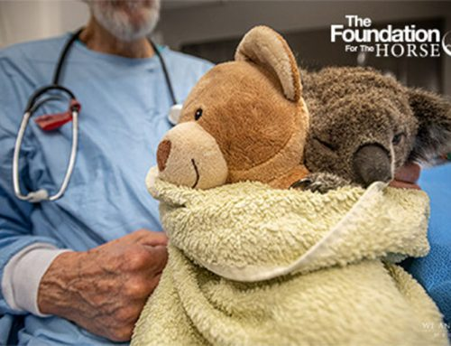 The Foundation for the Horse Awards $25,000 to Assist  Veterinarians Involved in Australia Wildfire Relief