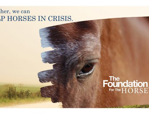 The Foundation for The Horse accepting contributions to help horses impacted by COVID-19 outbreak with feed and veterinary care