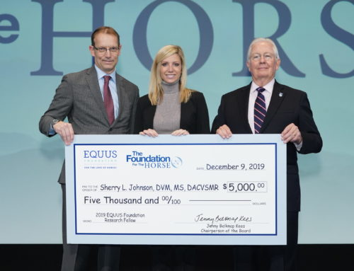 Deadline to Apply for Equine Research Fellows Scholarships
